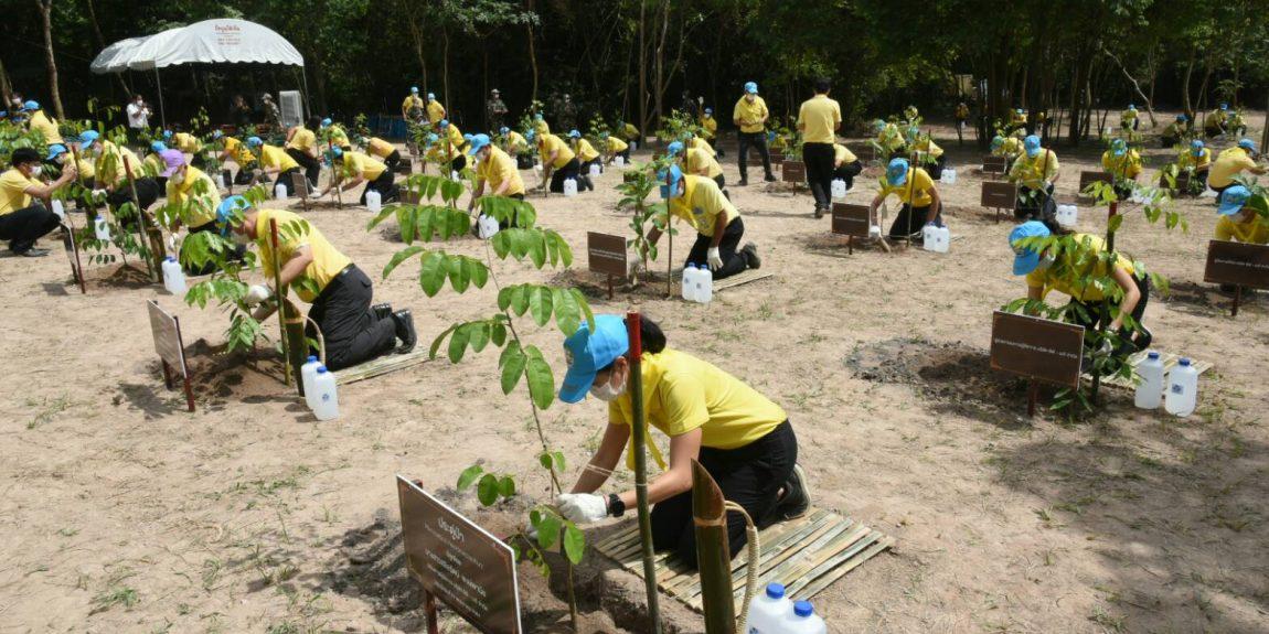 จิตอาสาพระราชทาน กิจกรรมปลูกต้นไม้โครงการปลูกป่าและป้องกันไฟป่า