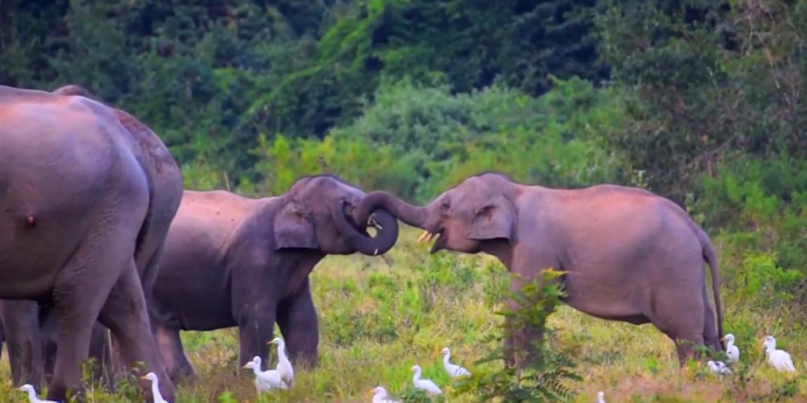 โครงการพัชรสุธาคชานุรักษ์ในพระบรมราชูปถัมภ์ ซึ่งเป็นโครงการอนุรักษ์ป่าและช้าง เพื่อการอยู่ร่วมกันอย่างสมดุลระหว่างคนและช้างอย่างมีสุข